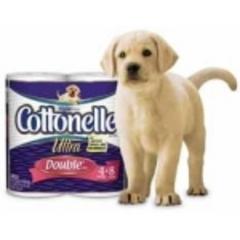 cottonelle-puppy-medium_frugal-mom-puppy